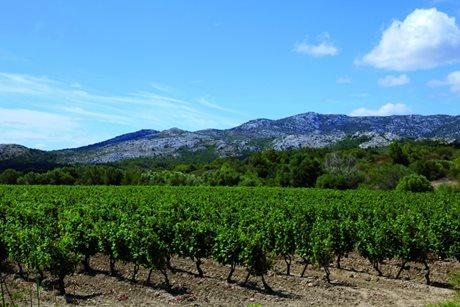 Camping Ensoya - Frankrijk - Languedoc-Roussillon