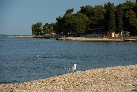 Camping Pineta - Croatia - Istria